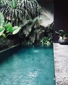 53 Amazing Backyard Landscaping Ideas With Minimalist Swimming Pool For Your Home - Home & Garden Tropical Backyard, Backyard Pool Landscaping, Ponds Backyard, Landscaping Company, Landscaping Ideas, Tropical Landscaping, Backyard Ideas, Patio, Kleiner Pool Design