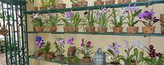 Um orquidário em casa -  Montando seu orquidário    Quando você começa a cultivar orquídeas é questão de tempo para se apaixonar, e logo vai querer aumentar sua coleção. Entram novas plantas, novasespécies, novas flores, e um dia você descobre que a coisa ficou séria. É hora de dar um passo adiante e montar uma es... - http://www.investimentointeligente.com/ecoblog/2016/08/24/um-orquidario-em-casa/