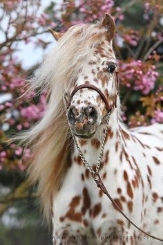 Beautiful ... my friends horse looks a whole lot like this one..