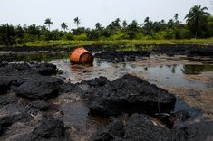 FOW 24 NEWS: Oil Spill Victims Sue Shell In UK