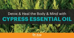 Cypress essential oil is obtained from the needle-bearing tree of coniferous and deciduous regions — the scientific name isCupressus sempervirens. The cypress tree is an evergreen, with small, rounded and woody cones. It hasscalelike leaves and tiny flowers. This powerful essential oil is valued because of its ability to fight infections, aid the respiratory system, …