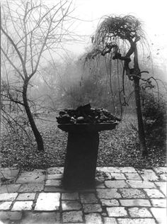 History of Art: History of Photography History Of Photography, Street Photography, Nature Photography, Josef Sudek, Wooded Landscaping, Garden Images, Great Photographers, Commercial Photography, Abstract Expressionism