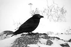122014 Xmas Bird Count ~