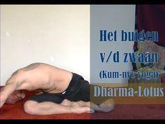 Kum-nye yoga: Het buigen van de zwaan - YouTube