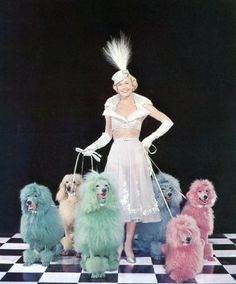 Doris Day poses with an array of multi-coloured poodles, 1952. Photo by Silver Screen Collection / Archive Photos / Getty Images. °