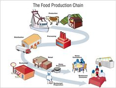 The Food Production Chain: Production, Processing, Distribution, Retail/Restaurant, Restaurant, Home Preparation: Restaurant/Home Consumer