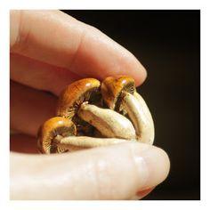 grzyby. ceramika / fungi. ceramic /// http://karolina-g.blogspot.com/2013/07/grzyby-grupa.html