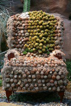 Cactus Chair, I definitely have enough cactus to start one of these.Cactus Chair, I definitely have enough cactus to start one of these. Cacti And Succulents, Planting Succulents, Planting Flowers, Cactus Planta, Cactus Y Suculentas, Cactus Cactus, Indoor Cactus, Mini Cactus, Yard Art