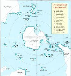 Image result for rockhopper strap penguin species range map antarctica