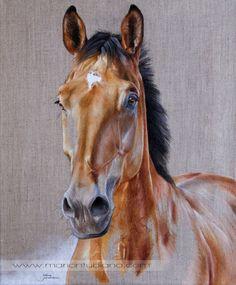 Paintings | Pastels animaliers et équins - Photographies - Peintures