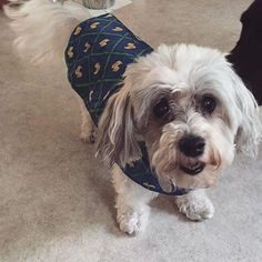 This was my very first dog, her name was Dolly. She was an awesome dog, I got her when I was 8, and she lived almost 18 years. She has been gone 7 months now but she is always remembered.   #dog #firstdog #childhooddog #dolly #fluffydog #fluffy #rainponcho #raincoat #maltipoo #maltesepoodle #mutt #rcpetproducts #rcpets #rubberducky