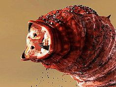 mongolian death worm mongolian death worm a mongol hallfreg