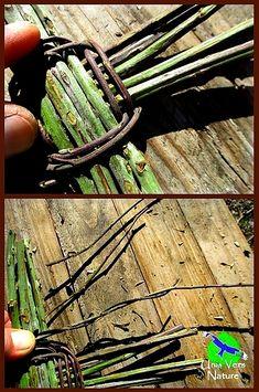 vannerie de ronce, vannerie sauvage, utilisation ronce, techniques primitives, Artisanat bushcraft, stages bushcraft, jura, franche-comté