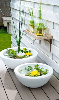 Mini - pond : do it yourself. Excellent 'water feature' for your garden or on your balcony. Flower Pots, Outdoor Gardens, Miniature Garden, Garden Deco, Mini Garden, Indoor Water Garden, Small Garden, Backyard Landscaping, Small Gardens