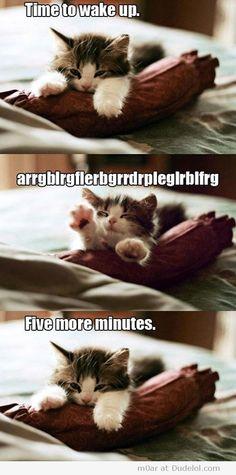 awwwwww tired kitty