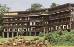 Tree Tops Lodge, Kenya