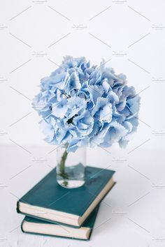 Blue hydrangea and books by OlgaPilnik on @creativemarket