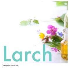 Bachblüten-Therapie. Larch: Bei mangelndem Selbstvertrauen, Minderwertigkeitskomplexen und falscher Bescheidenheit. http://clubpukka.com/bachblueten-larch/