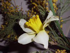 Narcis photo by Tatev Sargsyan
