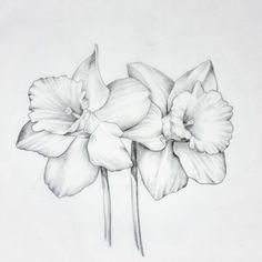 daffodil tattoo on hasshet - daffodil flower sketch Narcissus Flower Tattoos, Daffodil Tattoo, Birth Flower Tattoos, Tattoo Fleur, Flor Tattoo, Illustration Botanique, Illustration Flower, March Birth Flowers, Flower Sketches