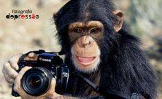 Chimpance con Camara.