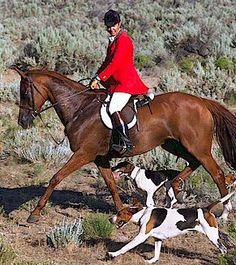 hunting,   Red Rock Hounds.