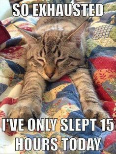Oh, the life of a cat!!!!!@@@@@ Dump A Day Funny Pictures Of The Day - 70 Pics NOTE this is so much me. ;-)