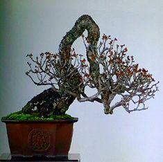 Backdrop Ideas, Backdrops, Tamarindus Indica, Bonsai Trees, Prunus, Small Trees, Tree Art, Ikebana, Buddha