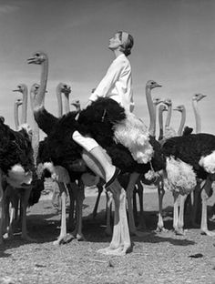 People riding ostriches
