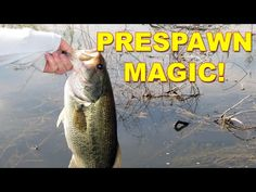 How To Find And Catch Bass In Early Spring | Bass Fishing - YouTube Best Bass Fishing Lures, Walleye Fishing Lures, Bass Fishing Videos, Best Lures For Bass, Fishing Rigs, Fishing Boats, Fishing Pictures, Fishing Techniques, Fishing Quotes