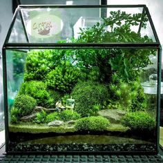 26 amazing diy mini terrarium garden projects and ideas 17 Aquarium Terrarium, Terrariums Diy, Terrarium Containers, Terrarium Plants, Glass Terrarium, Succulent Terrarium, Fairy Terrarium, Terrarium Wedding, Fish Tank Terrarium