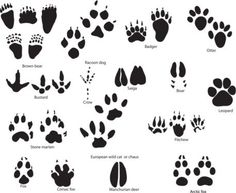 Maybe bear paw prints? Spoor is the kanji of food. Leave the trail on your bodies with paw print tattoos. Body Art Tattoos, New Tattoos, Print Tattoos, Small Tattoos, Heart Tattoos, Paw Print Clip Art, Bear Paw Print, Diy Planner, Cheetah Tattoo