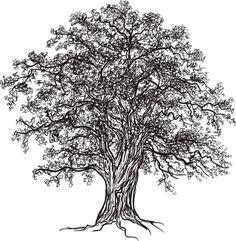 White Oak Tree, Oak Tree Tattoo, Tree Tattoo Designs, Tattoo Ideas, Celtic Symbols, Irish Symbols And Meanings, Celtic Knots, Tree Images, Irish Celtic