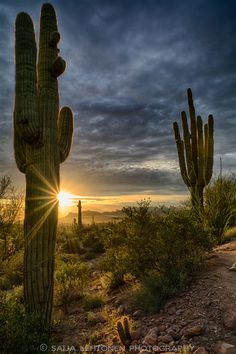 The Beauty of the Sonoran Desert, by Saija Lehtonen.... #sky #sunset #sun…