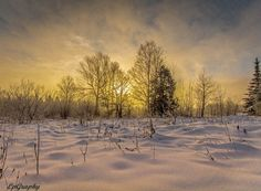 Winter's foggy light by LpGraphy on 500px