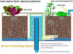 Auto syphon or bell syphon expalained. A lot of people keep asking how the bell siphon works, why there is a little tube, and so on. I made a nice animation to show you how te auto-siphon functions so you can integrate it to your eb and flood system like aquaponics.