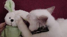 ├ フランス|世界へBon Voyage-4ページ目 Le Bristol Paris, Early Check In, Spa Services, Cat Cat