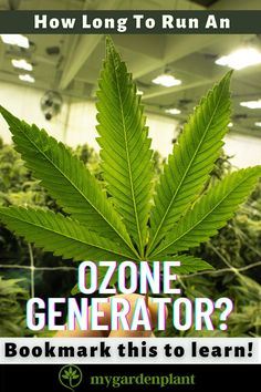 In running an ozone generator, it is best to first determine whether how big your grow room is or so your hydroponic garden as it can be used by both gardening systems. From then on, it is easier to identify which function would you like to serve its purpose. Hydroponics System, Hydroponic Gardening, Gardening Tips, Garden Plants, Indoor Plants, Ozone Generator, Air Ventilation, Grow Room, Plant Cuttings