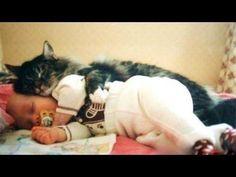 ¡Los mejores vídeos de gatos con bebés!