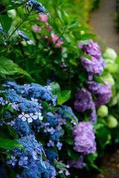 prettylittleflower: Blooming in the rain (by shinichiro*)