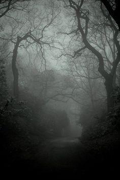 Foggy woods, eerie but beautiful