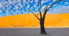 20 Most Beautiful Landscapes of Namibia Amazing Places On Earth, Beautiful Places, Lago Retba, Namib Desert, Out Of Africa, Photos Voyages, Green Landscape, Weird Pictures, Landscape Photographers