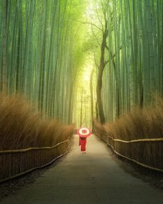 """BEAUTIFUL DESTINATIONS on Instagram: """"Walking into the Arashiyama Bamboo Grove feels like you are in another world 😍#TravelTip: Visit the grove on a windy day to see how…"""" Landscape Photos, Landscape Photography, Travel Photography, Nature Photography, Voyager Loin, Beautiful Places To Travel, Photography Workshops, Another World, Travel Abroad"""