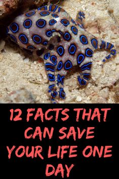 12 Facts That Can Save Your Life One Day – fashion fail Worst Celebrities, Funny Tweets Twitter, Fashion Fail, One Day, New Pins, Pin Collection, All In One, Save Yourself, Facts