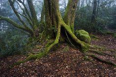 How to shoot beautiful rainforest photos. #photography #rainforest