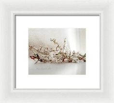 Cottonwood Bouquet - Framed Print