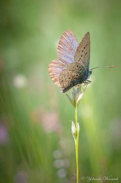 butterfly Kom Achterom