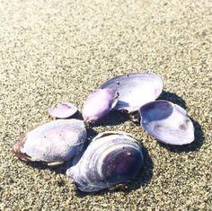 PHOTOGRAPHY | Instagram JOUE Design | @jouedesign | beach shells purple sand