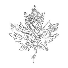 Canadian Maple Leaf Colouring Page with Abstract Drawing in Mind Form by Donald Lee Leaf Coloring Page, Colouring Pages, Abstract Drawings, Abstract Lines, Canadian Tattoo, Vegas Tattoo, Leaf Book, Tattoo Ideas, Tattoo Designs
