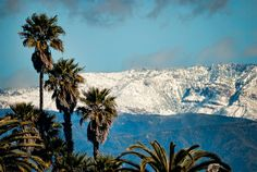 View towards the mountains on February 26, 2011, Ventura, California.  Palm trees and snow, by wink.